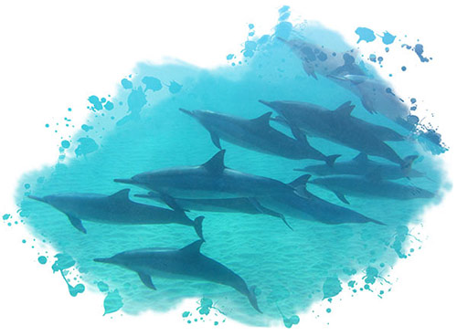 You could see dolphins while scuba diving on Kauai with Garden Isle Divers